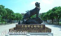 上海野生动物园老虎雕刻